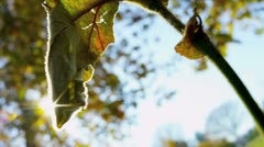 Close up Leaves Fall Parkland - stock footage