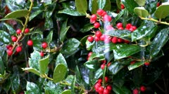Holly berries and snow drops Stock Footage