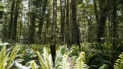 Fern glade Stock Footage