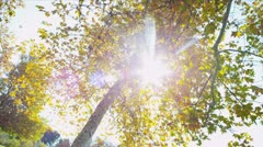 Inner City Parkland Autumn - stock footage