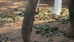 ELEPHANT 1 Stock Footage