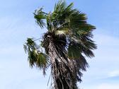 Cabbage Tree Native NZ - Low Angle Stock Photos