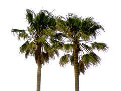 Twin Palms - stock photo
