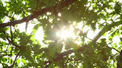 Oak leaves and the sun Stock Footage