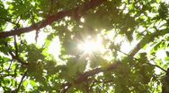 Stock Video Footage of oak leaves and the sun