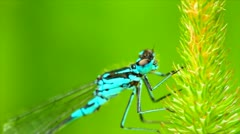 Dragonfly on blade of grass Stock Footage