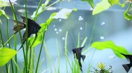 Aquarium on the background of the window Stock Footage
