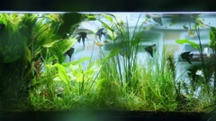 Aquarium on background of the window Stock Footage