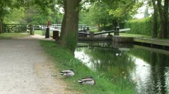 Ducks Sleeping by Canal Stock Footage