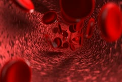 Blood stream with venules Stock Footage