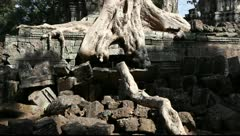 Ta Prohm_LDA N 00650 Stock Footage