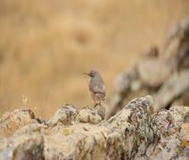 Bird flyaway Stock Footage