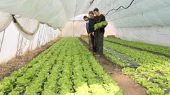 Farmers working in the greenhouse - stock footage