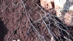 Red clay and roots Stock Footage