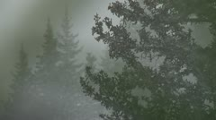 Silhouette Trees Snowstorm in Eerie Light 1 Stock Footage