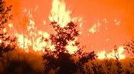 Stock Video Footage of Large forest fire