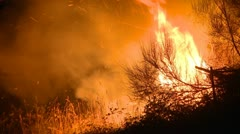 Fire in the bush Stock Footage