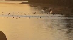 Fisherman Casts Net - stock footage