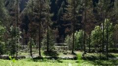 Forest in Swizerland Stock Footage