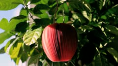Red apple Stock Footage