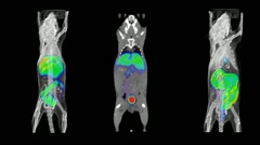 Mouse PET CT Scans Stock Footage