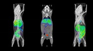 Stock Video Footage of Mouse PET CT Scans
