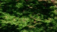 Shadow of trees over the grass Stock Footage