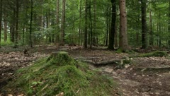 Cycling in the forest Stock Footage