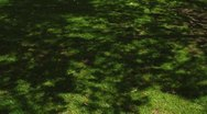 Shadow of tree leaves over the grass Stock Footage