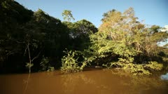 Amazon River and Rainforest Stock Footage