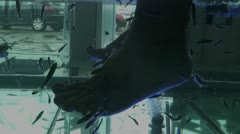 Aquarium with medical fish treating legs - stock footage