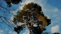 Timelapse. Tree clowdy day Stock Footage
