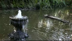 Ancient fountain and exotic bird. Stock Footage
