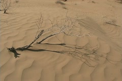 Turkmenistan desert branch claws over wavy sand Stock Footage