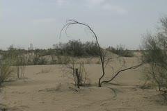Turkmenistan Karakum Desert spartan branch Stock Footage