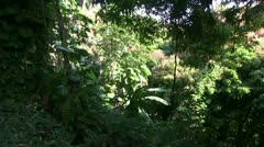 Hawaii, tropical rain forest Stock Footage