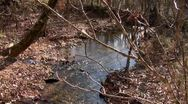 Amid Nature - Forest Creek Running Water with Birds Singing Stock Footage