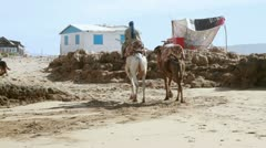 Man riding camel on the beach Stock Footage
