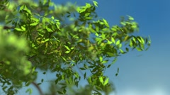 Tree branch growing - stock footage