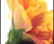 Zen rocks with flower V10 - PAL Stock Footage