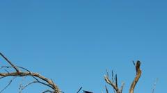 Hawk Talons Stock Footage