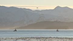 Tugboat, Fishing Boat, and Coast Guard Plane in Afternoon Stock Footage