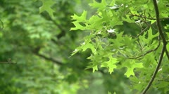 Leaves on the small branch of a tree Stock Footage