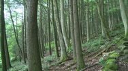Forest trees on a slight upgrade (1 of 3) Stock Footage