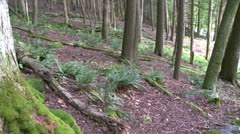 Forest trees on a slight upgrade (3 of 3) Stock Footage