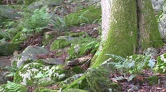Small ferns and rocks at the base of a tree in the forest Stock Footage