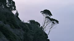 Coastal Slope Vegetation - Zen Tree Stock Footage