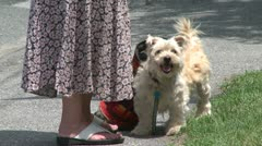 A woman with a dog on a leash standing at her feet panting (2 of 2) Stock Footage
