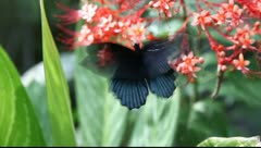 Butterfly feeding on spring flower. - stock footage