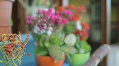 Flowerpots Stock Footage